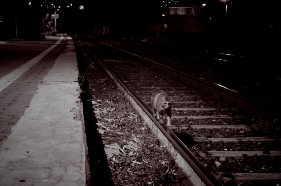 Midnight catwalking