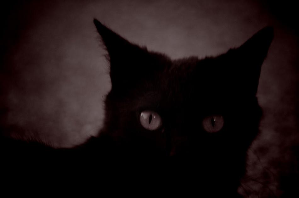 La nuit du chat noir